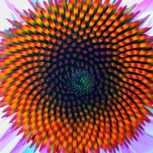 Fibonacci 4
