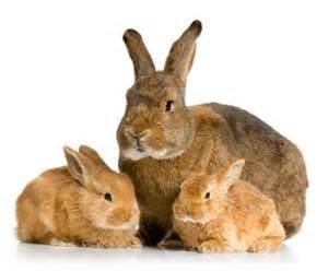 Fibonacci Rabbits