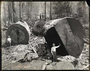 Redwood 2