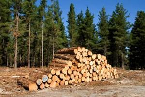 CITES -Timber 2